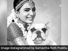 """""""Do I Ask You For Your Food?"""" Samantha Ruth Prabhu's Chat With Her Pet Is So Relatable"""