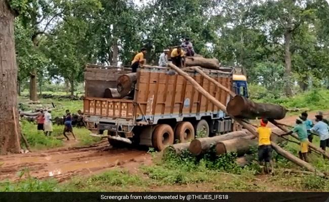 ट्रक पर लकड़ी चढ़ाने के लिए मजदूरों ने किया गजब जुगाड़, वीडियो देख आप भी बोलेंगे, ये होता है Team Work