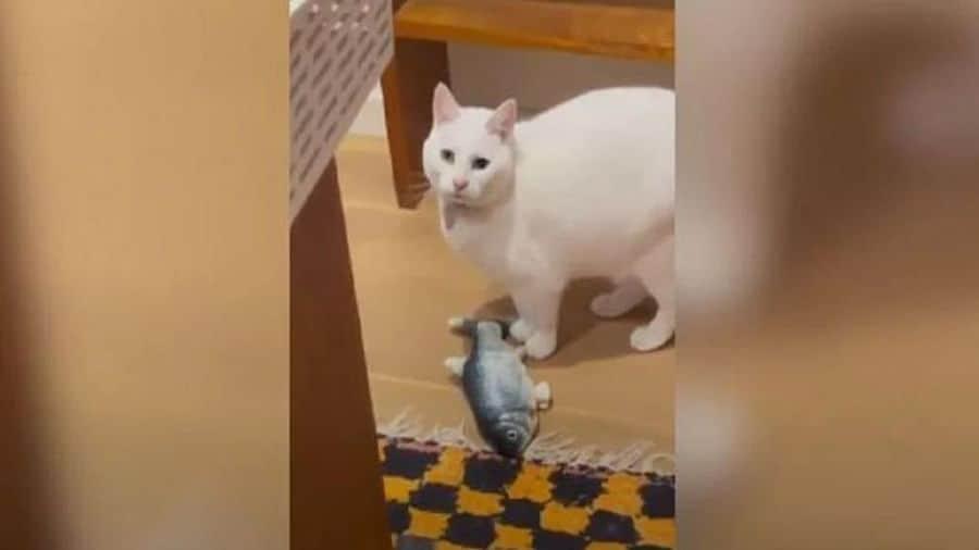 भूकंप के झटके महसूस कर बिल्ली ने अपनी मालकिन को चेताया, देखें वीडियो