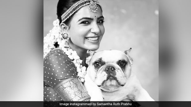 'Do I Ask You For Your Food?' Samantha Ruth Prabhu's Chat With Her Pet Is So Relatable