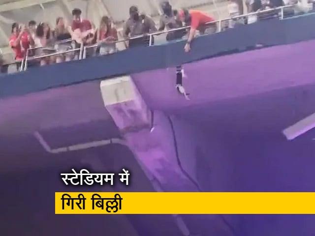 Videos : स्टेडियम में ऊपरी मंजिल से गिरी बिल्ली, बचाने के लिए एक साथ आए लोग