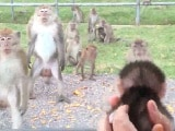 Video: जंगली बंदरों ने देखा छोटा सा बंदर का बच्चा तो करने लगे ऐसी हरकत