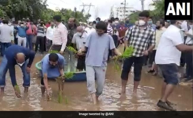Bengaluru Residents Plant Paddy Saplings, Offer Boat Rides For Rs 20 On Potholed Roads