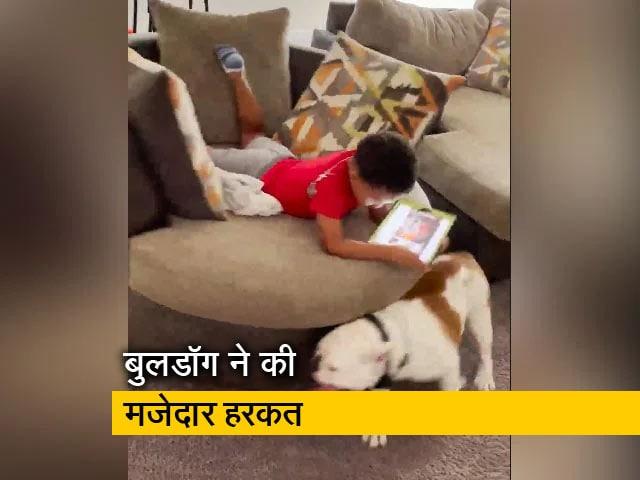 Videos : सोफे पर बैठकर पढ़ रहा था बच्चा, परेशान करने के लिए बुलडॉग ने की ये हरकत