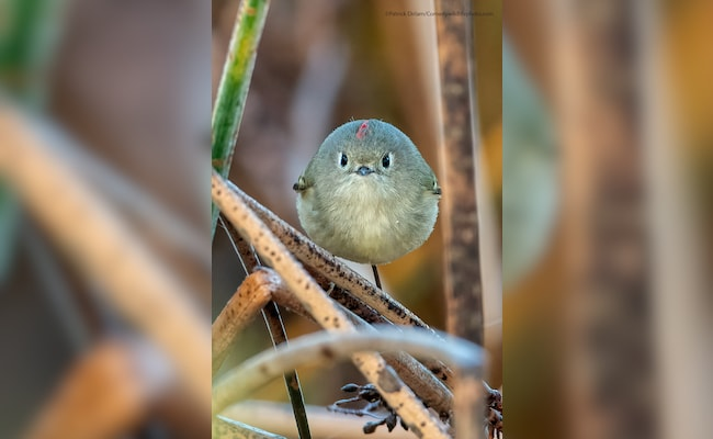 , Comedy Wildlife Photo Awards: Laughing Snake, Other Finalists This Year, The World Live Breaking News Coverage & Updates IN ENGLISH