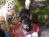 Video : खूब मज़े से कपड़े धोता है ये कुत्ता