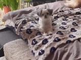 Video : खुश हुआ कुत्ता, तो कूद-कूदकर बिना रुके करने लगा मजेदार डांस