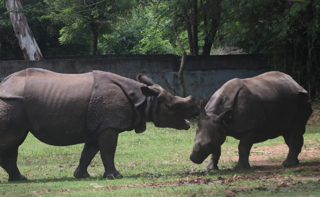 World Rhino Day: Two Rhinos At Tamil Nadu Zoo Adopted By IT Firm