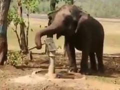 Viral Video: Elephant Uses Hand-Pump To Get Water