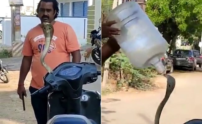 """, Watch Hair-Raising Rescue Of Snake Hiding In Scooter: """"Never Try This"""", The World Live Breaking News Coverage & Updates IN ENGLISH"""