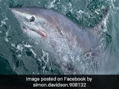 """Man Catches Record-Breaking 7-Foot Shark: """"The Most Mind-Blowing Capture"""""""