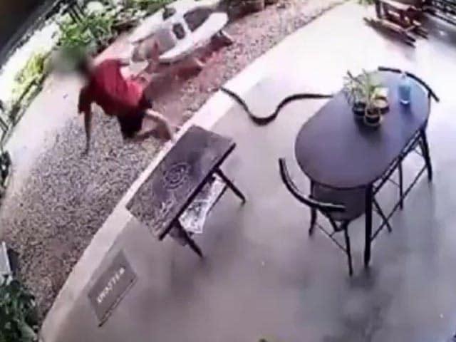 Video : Watch: Sudden Snake Attack Sends Man Running