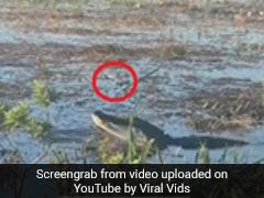Watch: Alligator Eats Drone In Video Shared By Sundar Pichai