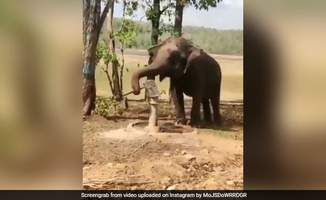 , Watch: Elephant Uses Hand-Pump To Get Water, The World Live Breaking News Coverage & Updates IN ENGLISH
