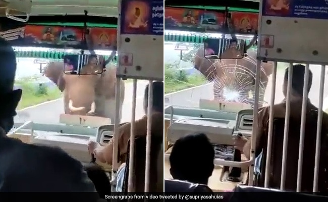 Watch: Angry Elephant Shatters Bus Windshield In Tamil Nadu