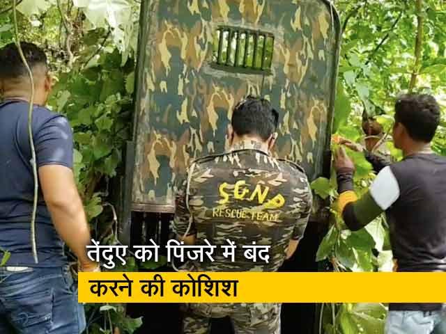 Videos : मुंबई के आरे फारेस्ट में लोगों पर हमला कर रहे तेंदुए को पकड़ने के लिए वन विभाग ने लगाए ट्रैप