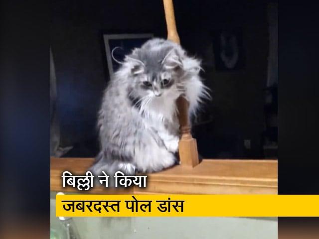 Videos : बिल्ली का जबरदस्त पोल डांस देखकर हैरान हो जाएंगे आप