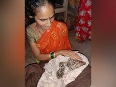 Watch: Leopard Cub Walking In Rain In Mumbai Rescued, Sleeps In Blanket