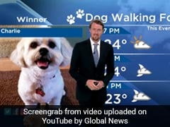 Dog Interrupts Weather Report, Steals The Show In Hilarious Video