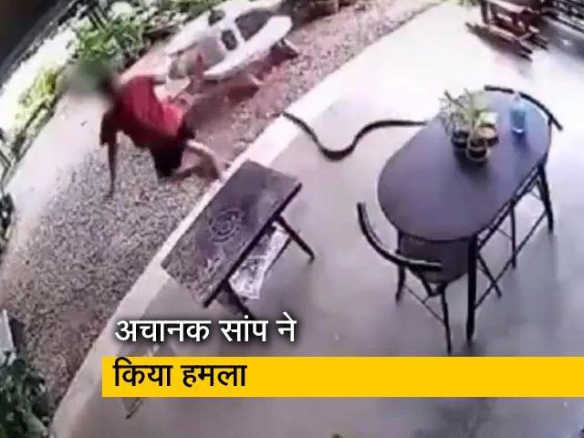 Video : सांप ने किया हमला तो सिर पर पैर रखकर भागा शख्स