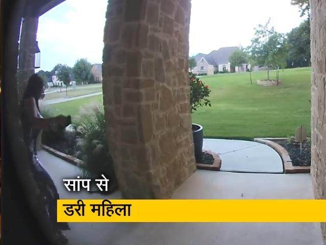 Video : झाड़ियों में छिपा था सांप, अचानक देखकर चिल्लाईं महिला