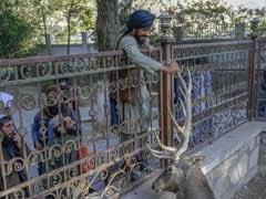 Gun-Toting Taliban At Kabul Zoo Mingle With Families, Kids