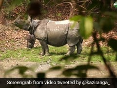 Watch: Mother Rhino Stands Guard To Protect Her Baby At Kaziranga