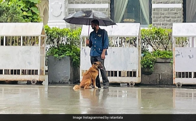 Ratan Tata's Shout-Out For Taj Employee Who Shared Umbrella With Stray Dog