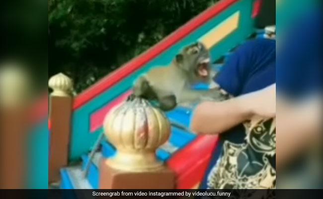 बंदर के साथ पोज़ बनाकर सेल्फी ले रहा था शख्स, तभी बंदर को आ गया गुस्सा, कर डाला ये हाल – देखें Video
