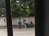 Video : सड़क पार नहीं पा रहा था कुत्ता, फिर शख्स ने किया कुछ ऐसा