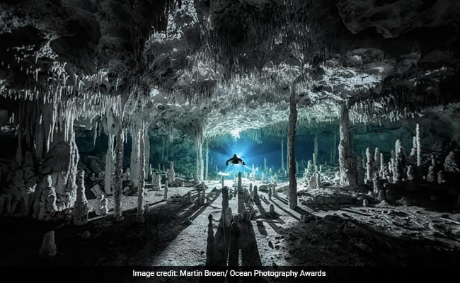 Amazing Pics From Ocean Photography Awards 2021