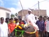 Video : Bihar Panchayat Poll Candidate Arrives On Buffalo To File Nomination