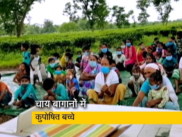 Video : असम के चाय बागानों में कुपोषित बच्चों की बड़ी तादाद, बहुत सारे बच्चे पोषण केंद्र भेजे गए