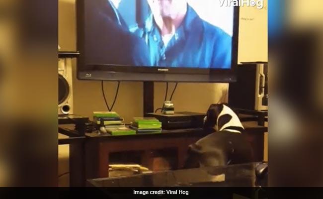 मालिक टीवी देख रहा था तभी कुत्ते ने बंद कर दिया, लोगों ने कहा- बहुत केयर करता है!
