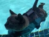 Video : बिल्ली ने की स्विमिंग, पूल में कुछ इस तरह की मस्ती
