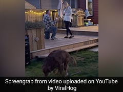 Party Pooper: Dog Ruins Romantic Proposal In ROFL Video