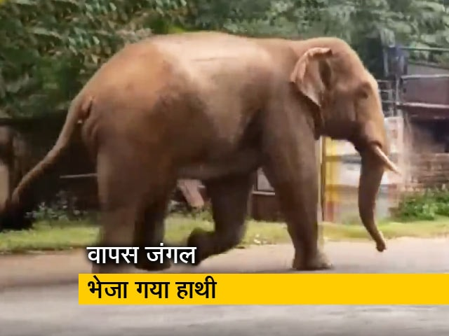 Videos : ओडिशा: रिहायशी इलाके में चहलकदमी करता दिखा जंगली हाथी