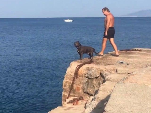 Video : समुद्र में तैरने के लिए कुत्ते ने मालिक के साथ ऐसे लगाई छलांग