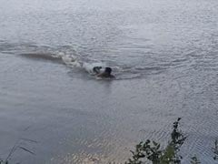"""""""He Tried To Get Away"""": Swimmer Attacked By Alligator In Terrifying Video"""