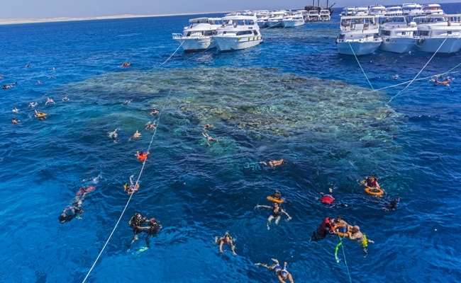Climate Change Threatens Egypt's Red Sea As Corals Fade Due To Warm Oceans