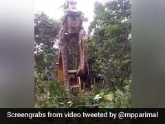 bieb276g_viral-snake-video-dominica-snake_120x90_22_October_21.jpg