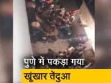 Video : पुणे वन विभाग के अधिकारियों ने हडपसारी में तेंदुए को पकड़ा