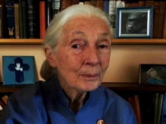 Video : Disrespect Of Nature Led To Climate Change, Biodiversity Loss: Dr Jane Goodall