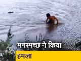 Video : VIDEO: झील में आराम से तैर था शख्स, पीछा करते हुआ पहुंचा मगरमच्छ और...