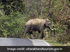 Conservation Body Bans Tourist Activities In Core Zone Of Uttarakhand's Rajaji Tiger Reserve