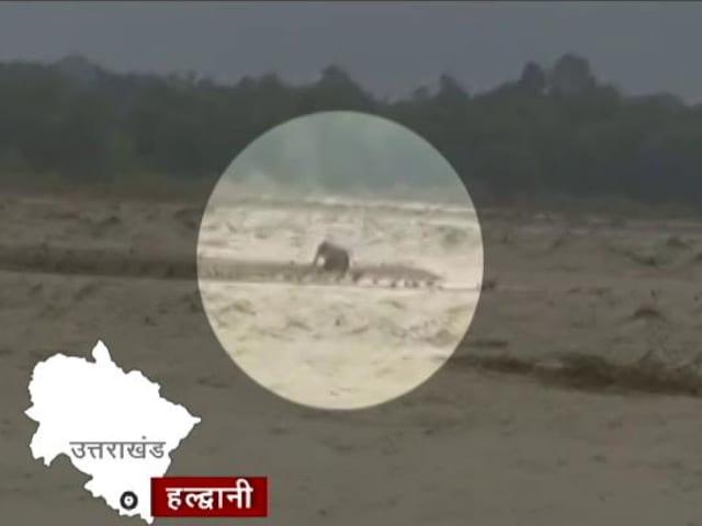 Videos : उत्तराखंड: भारी बारिश के बीच नदी के तेज बहाव में फंसा हाथी