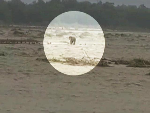 Video : Video: Elephant, Stranded In Rain-Battered Uttarakhand, Rescued