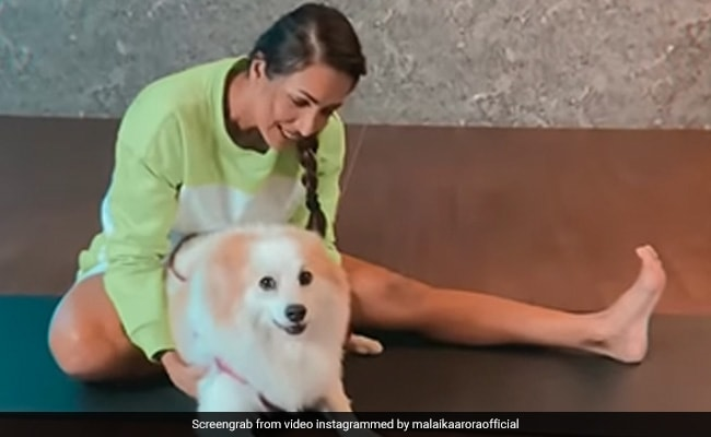 It's Always 'Playtime' For Malaika Arora When Her Pet Pooch Is Around