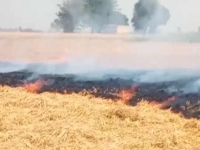 Video : Farmers In Punjab Burn Stubble, Say Not Left With Any Choice