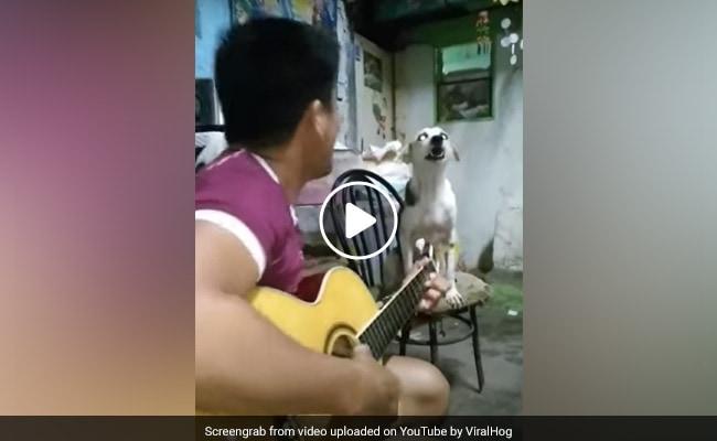 गिटार की धुन पर कुत्ते ने गाया जबर्दस्त सॉन्ग, लोगों ने कहा- अद्भुत है!